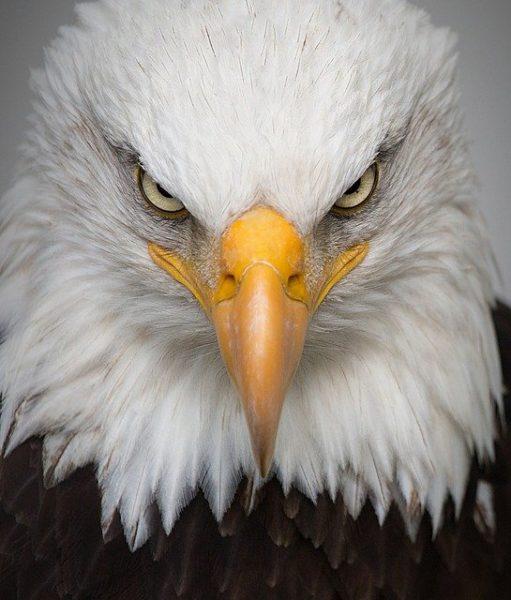 aigle-symbole-pouvoir