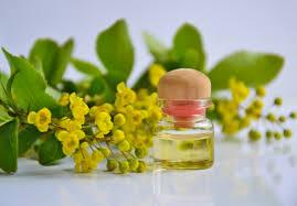 Images Gratuites : huile essentielle, Aromathérapie, Huile ...