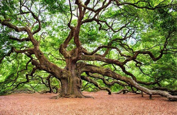 Tout savoir sur l'arbre de vie celte
