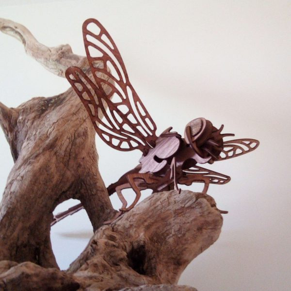 insecte en bois