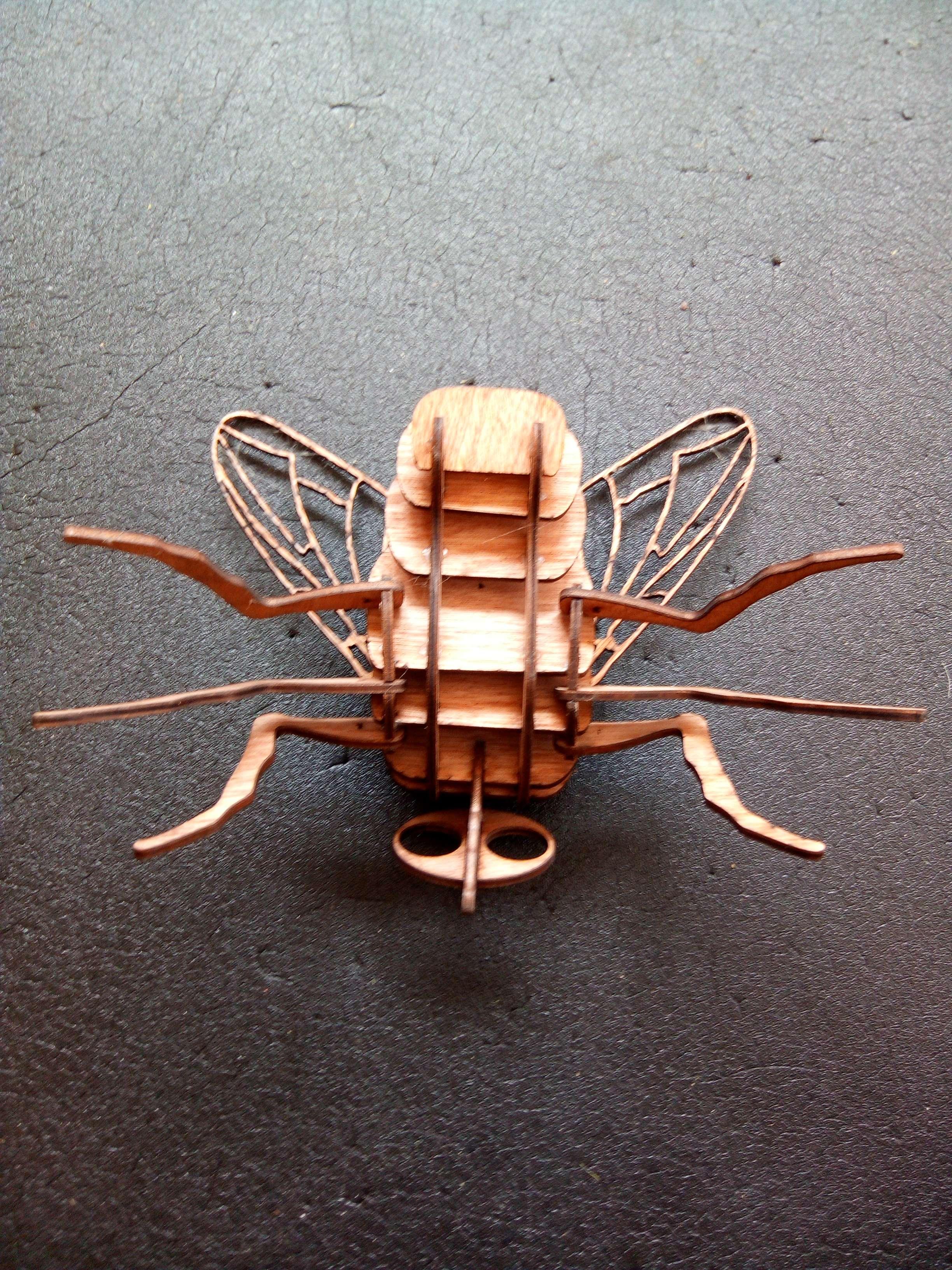 insecte bois
